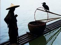 cormorant fishing on Li River