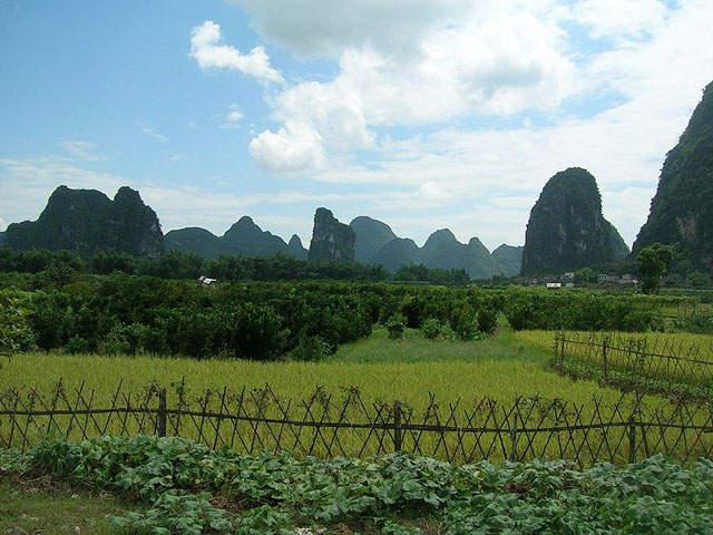 scenery along Li River