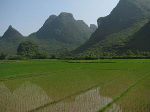 Rice Paddies Tour in Yangshuo